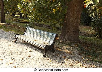 experiência., vazio, maple, strewn, outono, ruela, folhas, banco, parque, outono