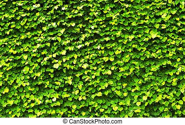 experiência verde, natureza