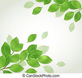 experiência verde, ramo