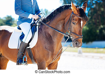 Experienced a horseman enjoying his favorite activity
