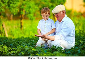 experienced grandfather teaching curious grandson, potato rows