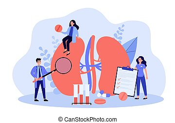 Experienced tiny doctors examining kidneys flat vector illustration. Cartoon medical specialists studying donor inner organ. Medicine, physiology and pharmacy research concept