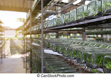 experiment of plant tissue culture plant cell in the...