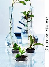 experimentera, med, flora, in, laboratory.