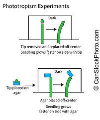 Experiments demonstrating phototropism in plants - ...