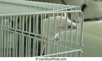 Experiments on laboratory mice