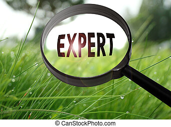 experto