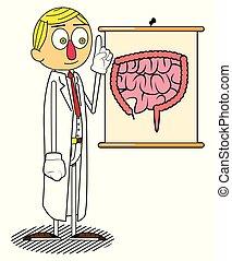explicando, intestine., doutor