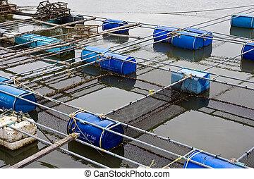 exploração de piscicultura