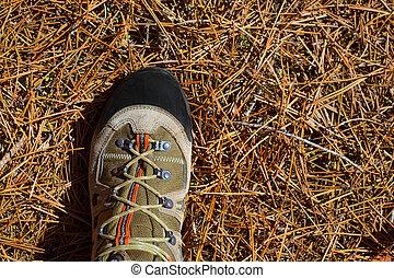 explorador, hicker, bota, detalle, pino, pies, agujas, secado