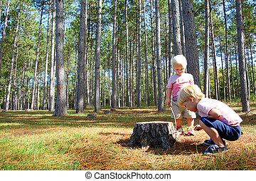 explorar, árvore, dois, pinho, jovem, floresta, crianças