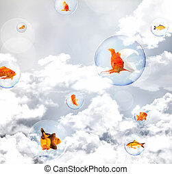 exploration - goldfish in soap bubble fly