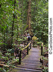 Exploring Borneo rainforest