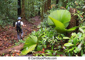Exploring Borneo rainforest