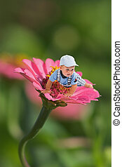 exploring - Little baby boy crawling on pink daisy