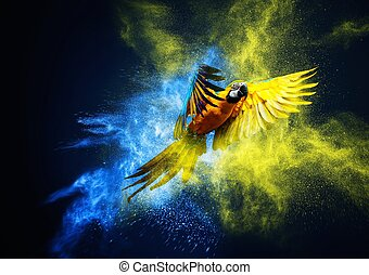 explosion, papagai, aus, fliegendes, ara, pulver, bunter