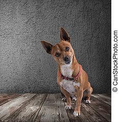 expression, chien, railleur