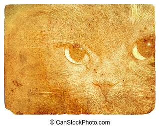 Expressive cat eyes. Old postcard. - Expressive cat eyes....