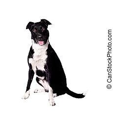 Expressive Dog