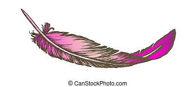 extérieur, perdu, couleur, élément, vecteur, dessiné, plume,...