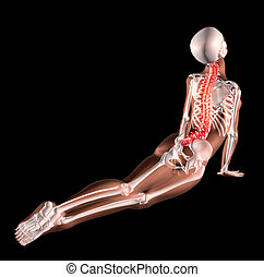 extensión, esqueleto, hembra, espalda
