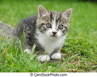 exterior, gato
