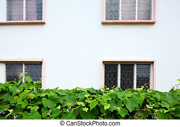 Exterior of house with green plant