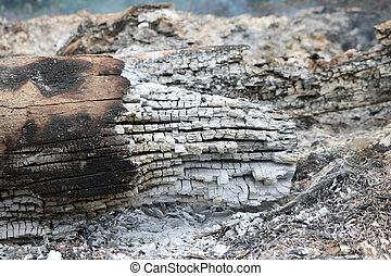 Extinguished wood  after being on fire.