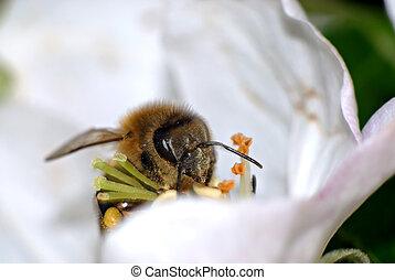extrême, abeille