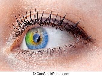 Extracto, ojo, humano