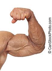 Extreme bodybuilding. - Extreme big biceps isolated on white...