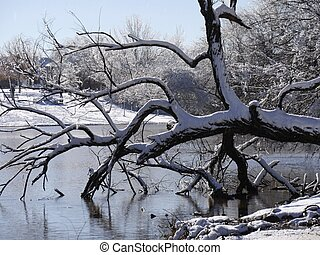 Extreme close up of a bent tree covered with snow over the pond