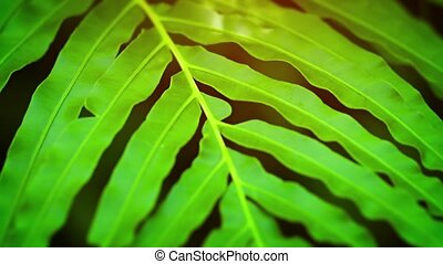 Extreme Close-up of a Green Fern Swaying in the Breeze