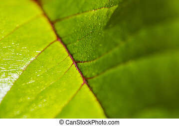 Extreme Close-Up of a Leaf - An extreme close-up of a leaf...