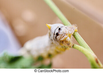 Extreme close up of a silkworm