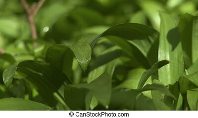 Extreme close up of leaves shivering in the breeze - Extreme...