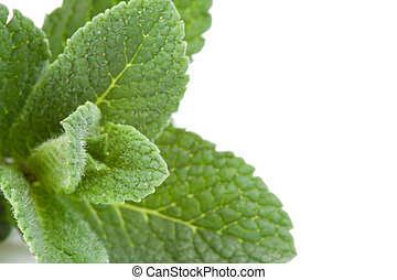 Extreme close up of mint against a white background
