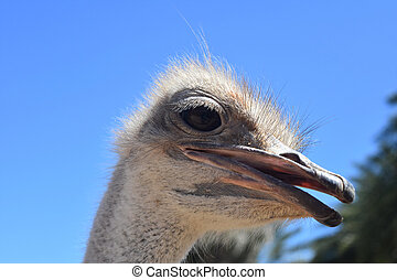 Extreme Close Up of Ostrich - Adorable Ostrich in Extreme...