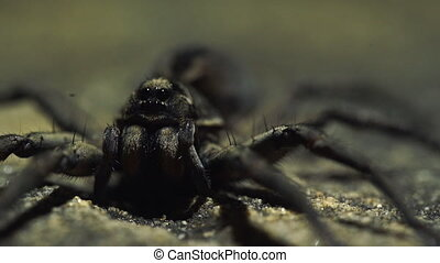 Extreme close up of spider with shifting lighting in background
