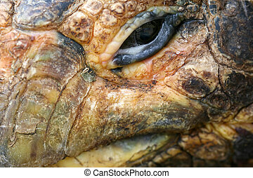 Extreme Close Up of Tortoise
