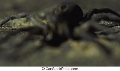Extreme close up on spider's eyes and fangs - Extreme...