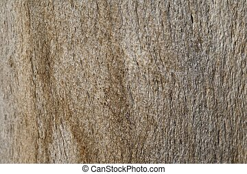 extreme close-up on the palm bark texture
