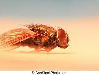 close up shot of fly