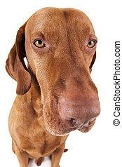 extreme closeup dog portrait