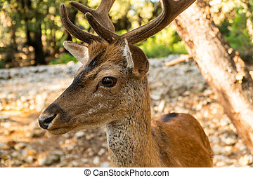 Extreme closeup portrait of majestic powerful young red deer stag in nature
