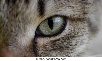 extreme macro close-up of a cat's eye