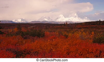 Extreme Vivid Autumn Leaves in Forest Near Mt Mckinley -...
