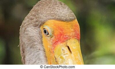 Extremely Closeup Sandhill Crane with Big Beak Looks to Camera
