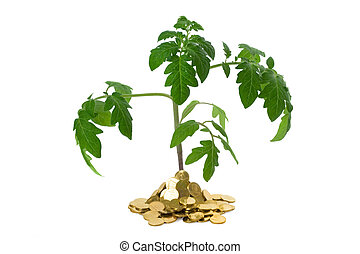 Exuberant plant in heap of coins - Exuberant plant sprouting...