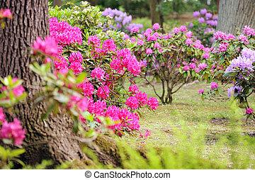 exuberante, ajardinado, jardín, con, arriate, y, colorido,...